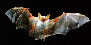 FortKids Natuurhistorie -->Nacht van de vleermuis